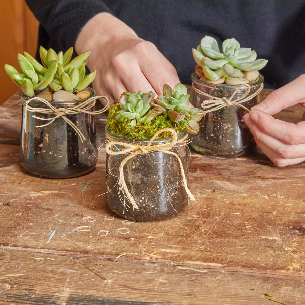 Plant Succulents In Recycled Glass Jars The Family Handyman
