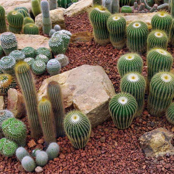 outstanding desert landscaping