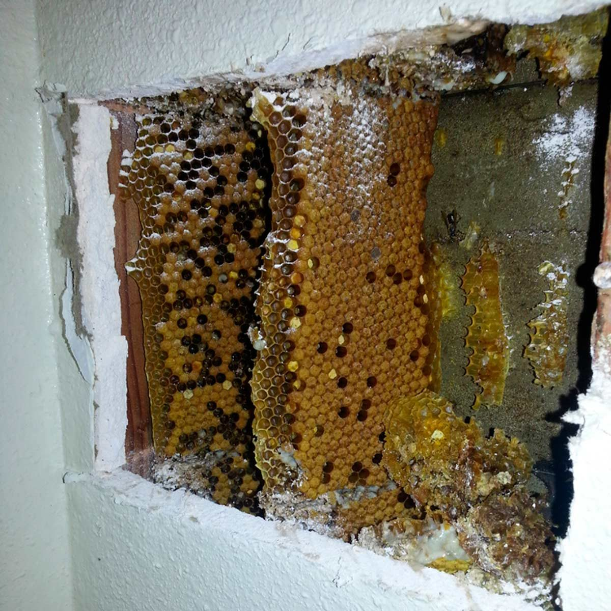 Why Do Some Old Homes Have a Beehive Built Into a Wall