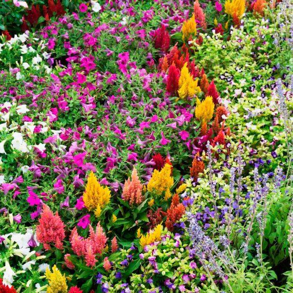 favorite flower bed ideas
