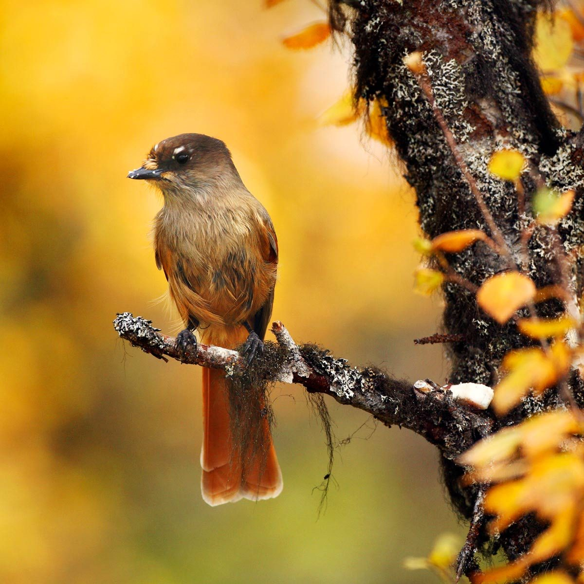 Furnace Wiring From Breaker Box Fall Backyard Birding Checklist Tips To Attract More
