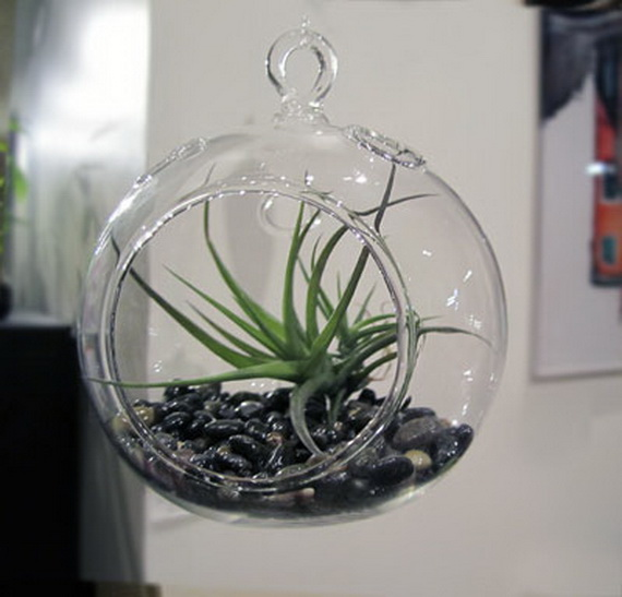 Unusual Air Plants  Home Decoration Inspiration Ideas and Gifts  family holidaynetguide to