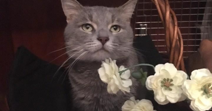 Gray kitten in basket with flowers.