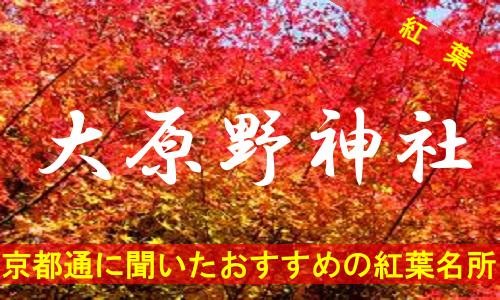 kouyou-kyouto-ooharano-2289