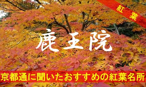 kouyou-kyouto-rokuouin-2679