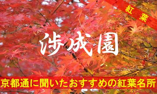 kouyou-kyouto-syouseien-2814