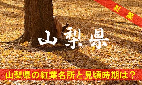 kouyou-ya-2676
