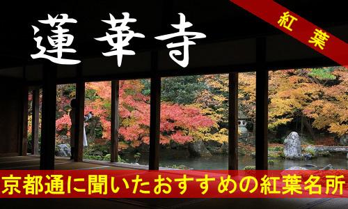 kouyou-kyouto-rengezi-3914