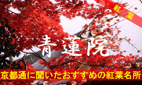 kouyou-kyouto-syourenin-3490