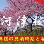 河津桜の見頃時期と写真