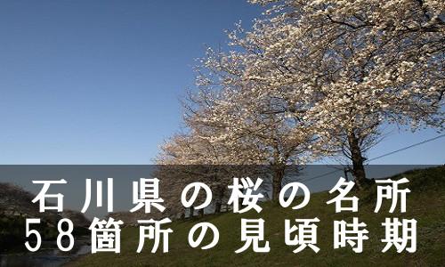 sakura-28-6816
