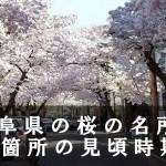 岐阜県の淡墨公園など桜の名所96箇所の見頃時期