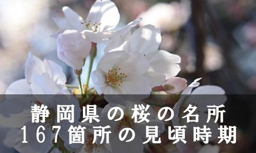 sakura-33-6862
