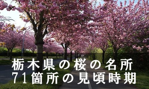 sakura-36-6876
