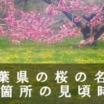千葉県の成田山公園など桜の名所80箇所の見頃時期
