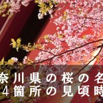 神奈川県の大山など桜の名所114箇所の見頃時期