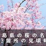 福島県の三春滝など桜の名所203箇所の見頃時期