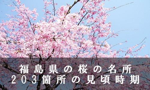 sakura-42-6914