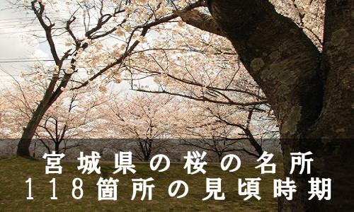 sakura-45-6932