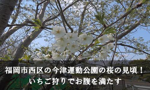 sakura-50-6978-0