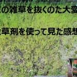 庭の雑草駆除!強力な除草剤ラウンドアップの使い方と効果を検証