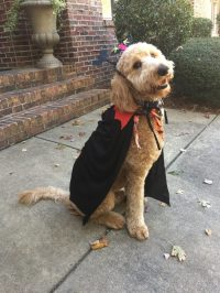 Halloween Costumes for Dogs - Family Savvy