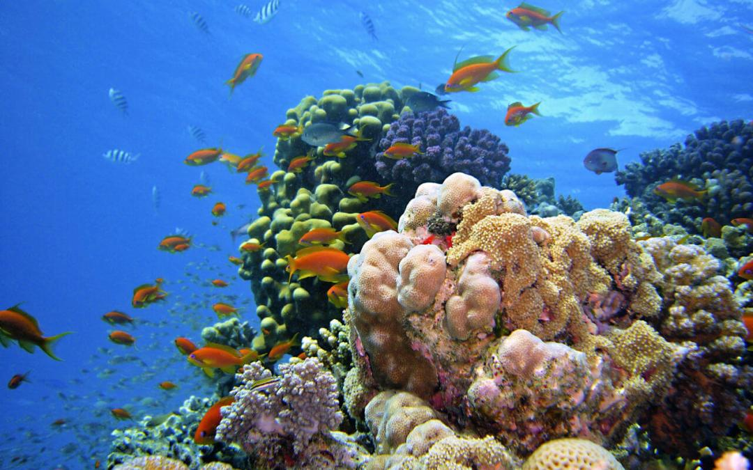 Red Sea Diving Egypt