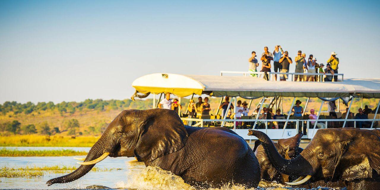 African Safari; Courtesy of THPStock/Shutterstock.com