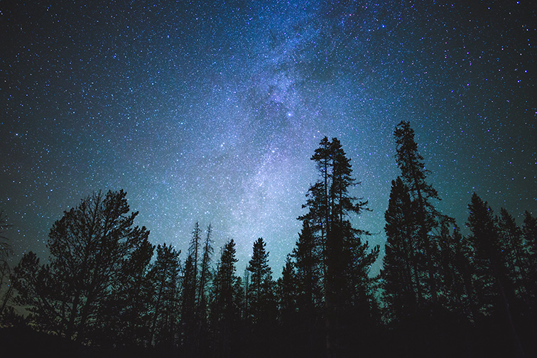 Forest trees under Milky Way in night sky; Courtesy of The Adaptive/Shutterstock