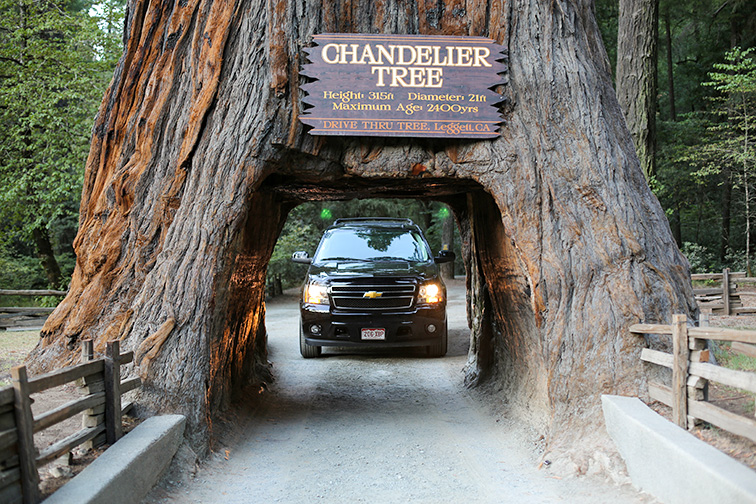 Famous Chandelier Tree in Leggett, California; Courtesy of Traveller70/Shutterstock