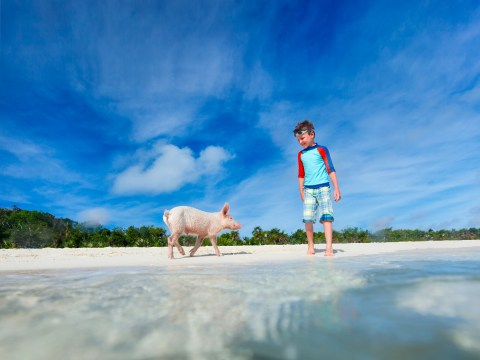 Boy with little piglet at Exuma beach, Bahamas. ; Courtesy of BlueOrange Studio/Shutterstock