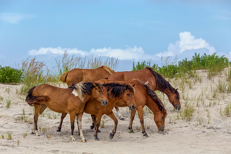 Chincoteague Island ; Courtesy of Stephen Bonk/Shutterstock