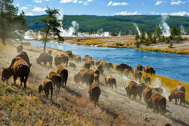 Yellowstone National Park; Courtesy of Lee Prince/Shutterstock