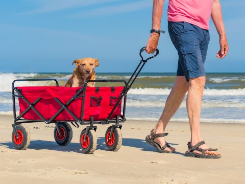 man walking with dog in cart at the beach; Courtesy Ivonne Wierink/Shutterstock