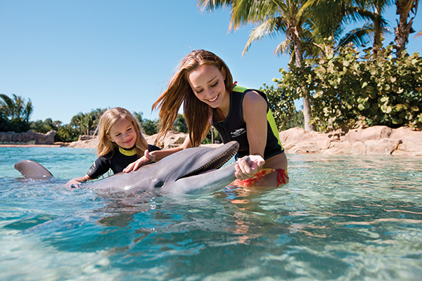 Dolphin swim experience at Discovery Cove in Orlando
