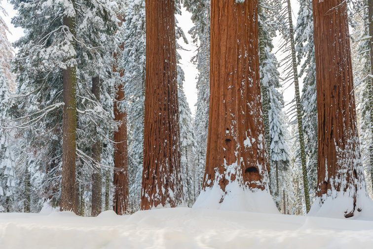 Sequoia and Kings Canyon National Park in the Winter