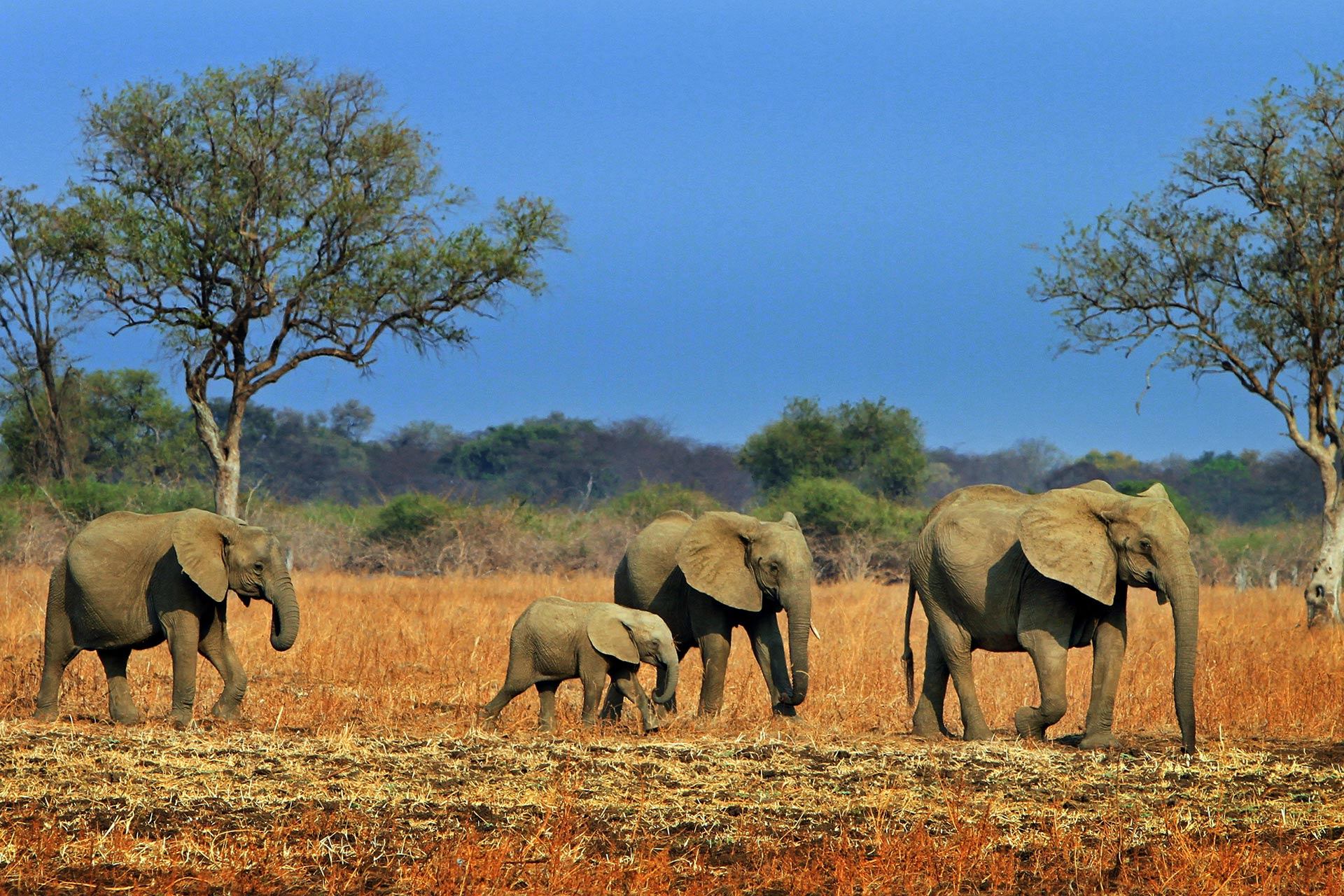 South Luangwa National Park in Zambia