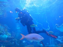 Silverton Casino Aquarium Great Free Las Vegas Family