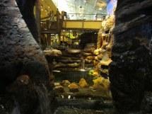 Silverton Casino Aquarium Great Free Las Vegas Family