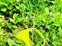 Bandana armband geel