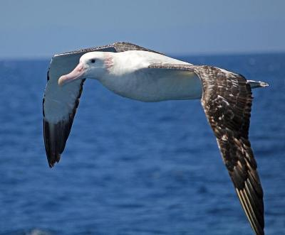 Jules verne albatross myideasbedroom com