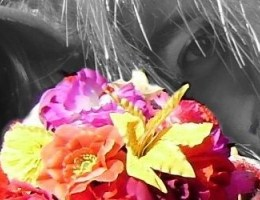 2011_carnaval_dunkerque_arton333