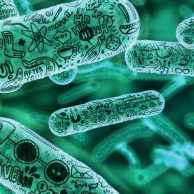 Inside Ginkgo, the gene factory where robots help make new weird synthetic organisms