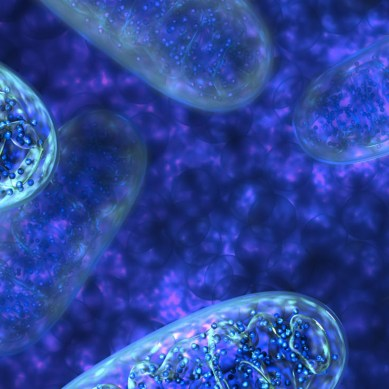 Researchers think our cellular powerhouses may be responsible for aging