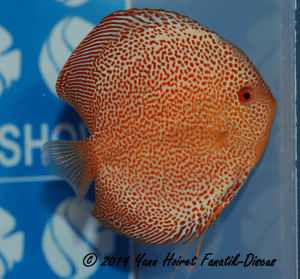 Discus 2nd CAT Spotted France discus show 2014