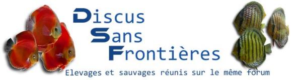 Forum Discus Sans Frontières