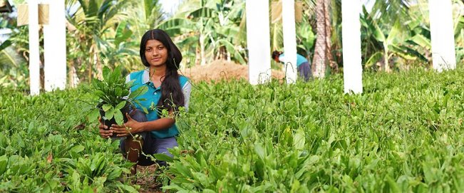 Production de plantes Dennerle au Sri Lanka