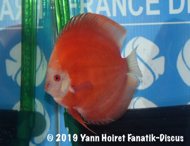 2nd Red discus FDS 2018
