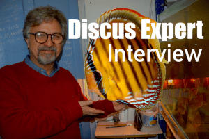 Discus fish expert Interview