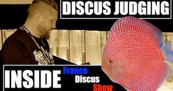 Image a la une Inside FRANCE DISCUS SHOW COGNAC